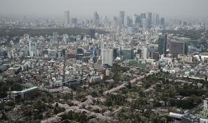青山霊園の桜と新宿