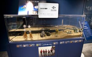 すみだ水族館 DASH海岸
