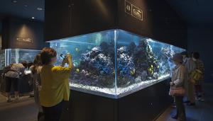 すみだ水族館 光と水のはぐくみ~サンゴ礁~