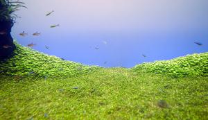すみだ水族館 水のきらめき~自然水景~