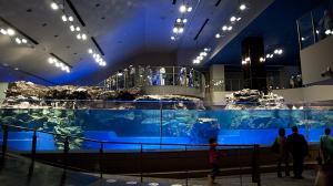 すみだ水族館 水といのちのたわむれ~ペンギン・オットセイ~
