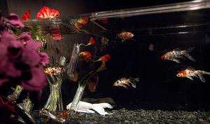 アートアクアリウム展2012