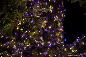 東京ミッドタウンのクリスマス・奇跡の木