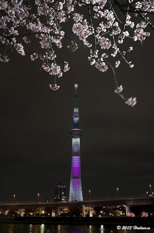 東京スカイツリー桜特別ライティング