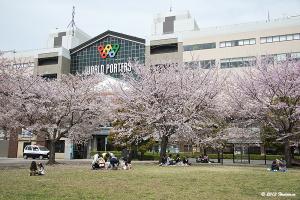 ワールドポーターズ前の桜