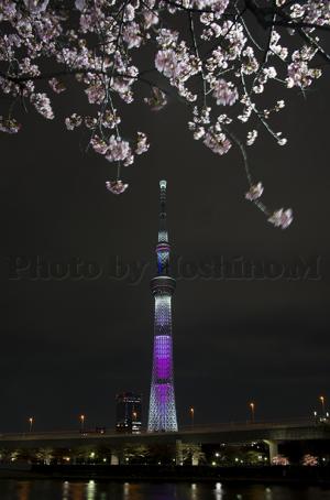東京スカイツリー 桜特別ライティング・舞