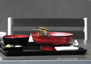 スズメのお食事