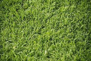 国立競技場 FINAL  ピッチの芝生