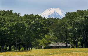 昭和記念公園から見える富士山