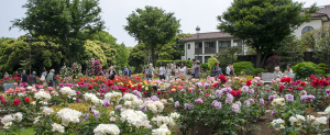 イギリス館とバラの花