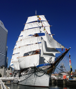 帆船日本丸総帆展帆&満船飾