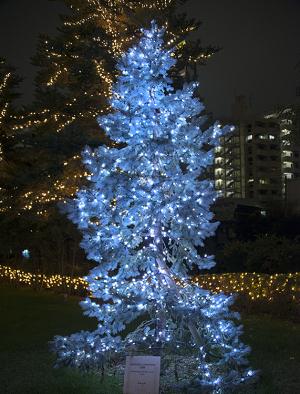 ミッドタウン・クリスマス2015 エンヤツリー