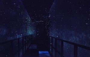 星空のイルミネーション(STARRYSKY ILLUMINATION)