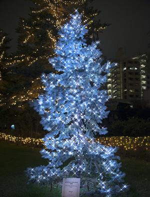 エンヤツリー(Enya Tree)