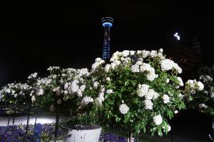 マリンタワーとバラ