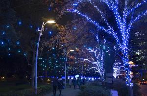 スターライトロード(Starlight Road)