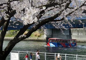 桜とスカイダック