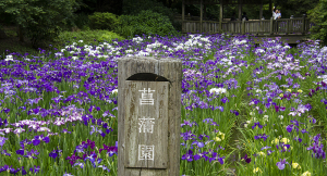 生田緑地・菖蒲園
