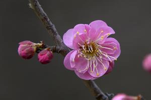 八重松島(やえまつしま)