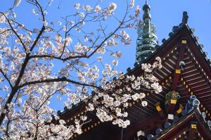 上野動物園の五重塔(旧寛永寺五重塔)