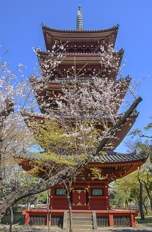 旧東叡山寛永寺五重塔(重要文化財)