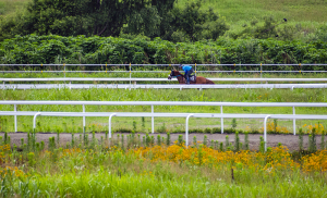 川崎競馬小向厩舎トレーニングセンター