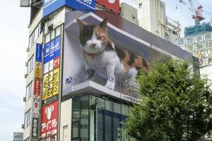 新宿駅東口の超巨大 三毛猫